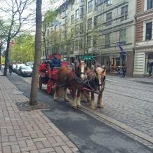 Horses outside Klaus K, Helsinki, Finland